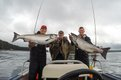 A matching set of Chinook salmon at Langara Fishing Lodge