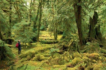 Great Canadian Rv >> The Great Bear Rainforest, BC - SunCruiser