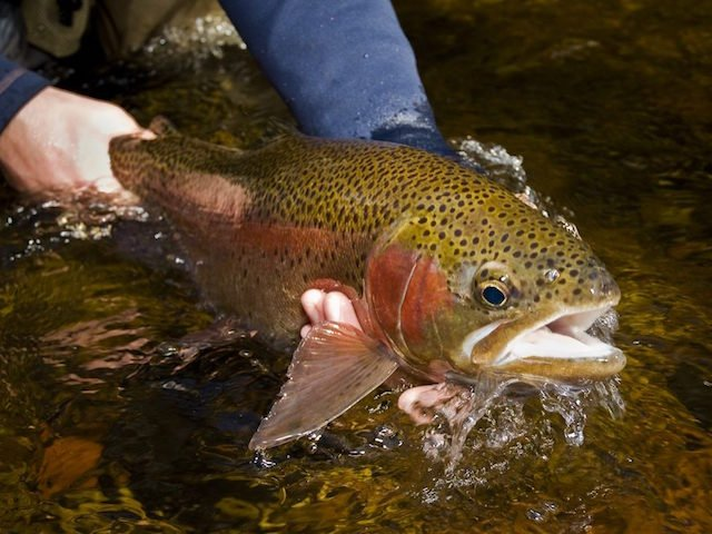 trout-fishing-fly-fishing.jpg