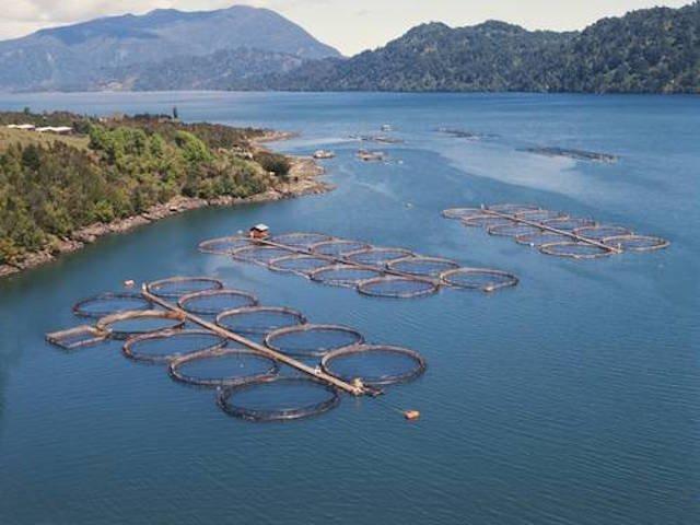 Save wild salmon, support Bill C-228