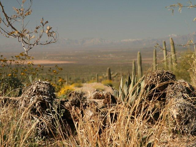 View across the Sonoran Desert James Stoness 8257.JPG