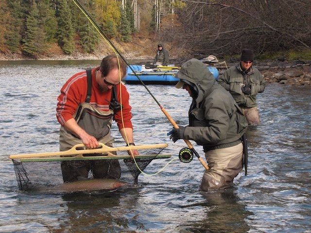 Bulkley river steelhead fishery needs your input suncruiser for Steelhead fishing tips