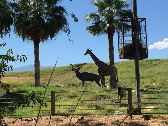 Living Desert Zoo And Garden Ca Suncruiser