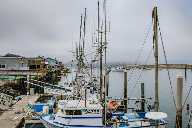Fish, Fog and Fun in Coastal Californias Morro Bay