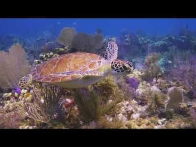Big Pine & the Lower Keys - Video teaser