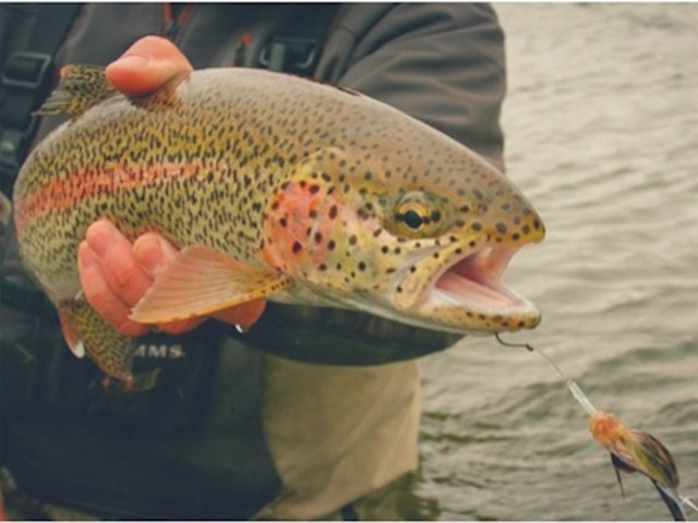Trout Spey Clinic