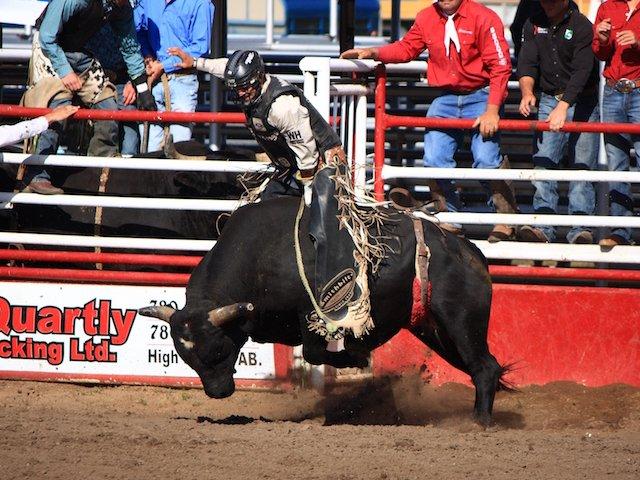 18 Rodeo Bull_townofHighPrairie.jpg