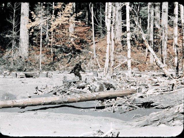 Frame 352 photo patterson-gimlin-footagestabilized-1024x723 (2).jpg