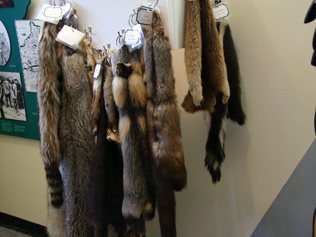 Furs  JStoness 2016.JPG
