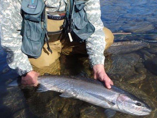 Save endangered Thompson River Steelhead
