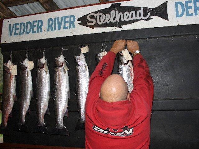 Chilliwack/Vedder River Boxing Day Steelhead Derby
