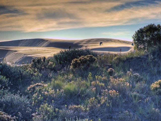 Pismo Sand Dunes