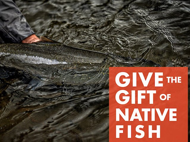 Native Fish Society works hard to protect native fish