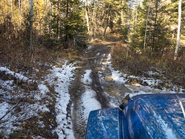 Skiff of snow on the trail.jpeg