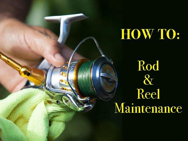 Maintain Fishing Rod & Reel