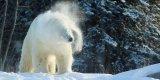 1 photo Cochrane Polar Bear Habitat .jpg