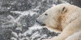 2 photo Cochrane Polar Bear Habitat .jpg