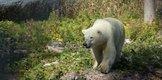 3 photo Cochrane Polar Bear Habitat .jpg