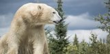 4 photo Cochrane Polar Bear Habitat .jpg