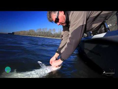 Be informed when angling for sturgeon - Video teaser