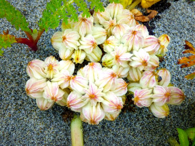 haida beach flowers-2.jpg