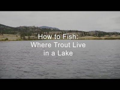 Where trout live in a lake - How to Fish Video teaser