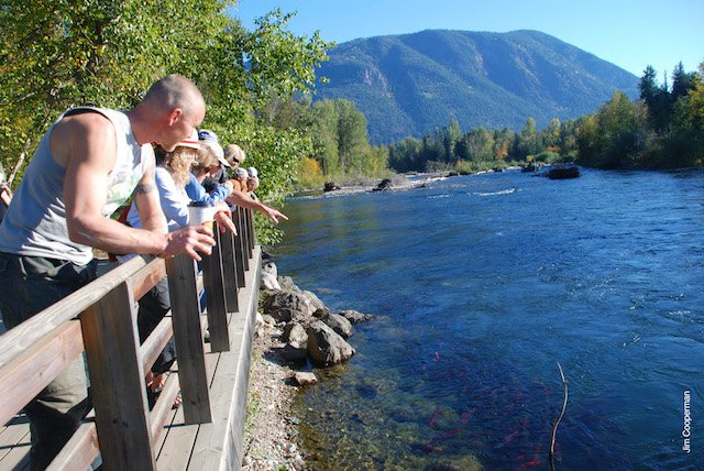 There are many opportunities to observe the salmon.  Mojo Tours