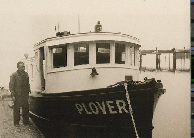 2 PLOVER07.JPG