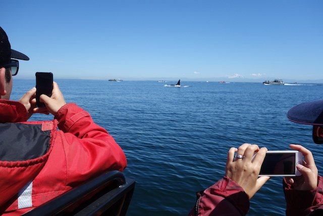 You'll be tempted by seaside adventures such as the whale watching tours.