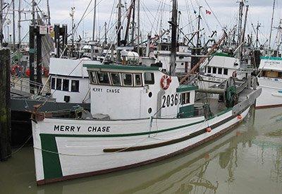 Merry-Chase-400.jpg