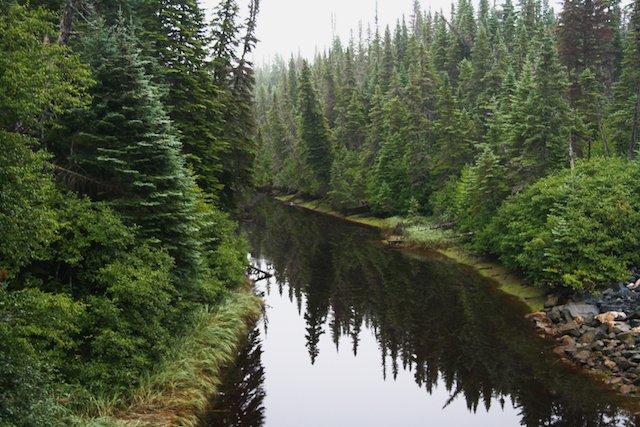 Forest scene JStoness 6423.jpg
