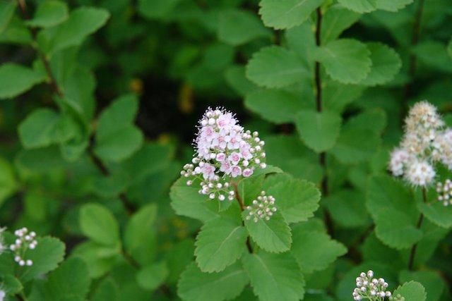 Flower  JStoness 6399.jpg