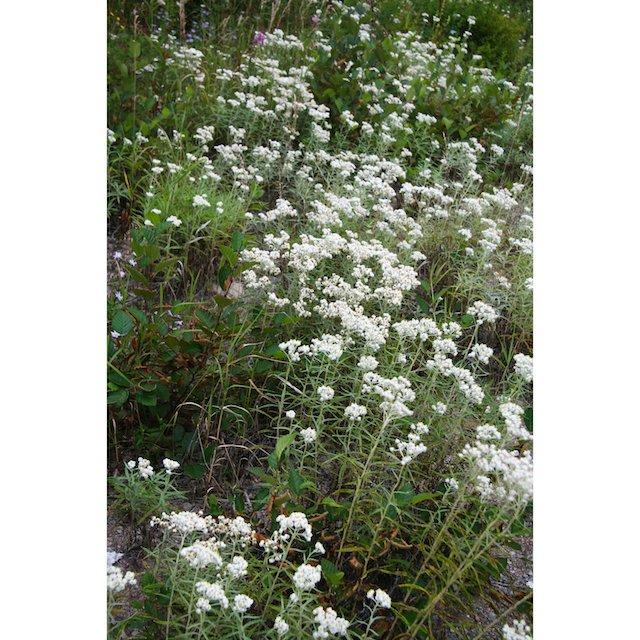 Lots of Flowers JStoness 6395.jpg
