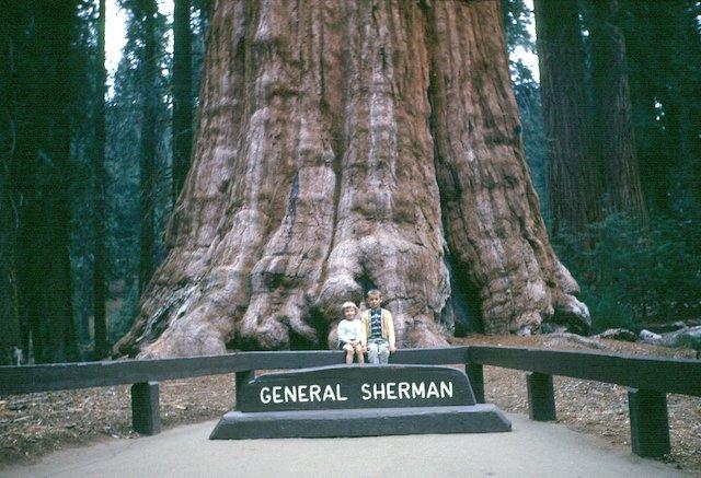 4 Sequoia photo Willian Ennis.jpeg