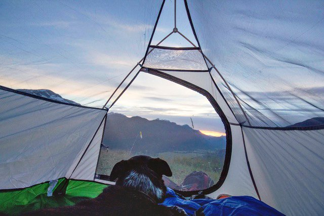 Tent and Pup at Sunset