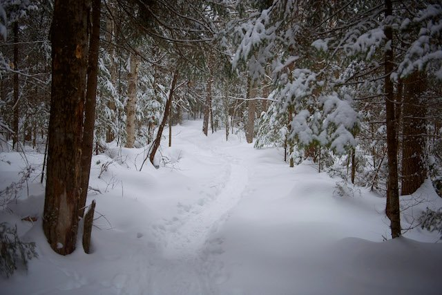 Algonquin_HighlandsBackpackingTrail.jpg