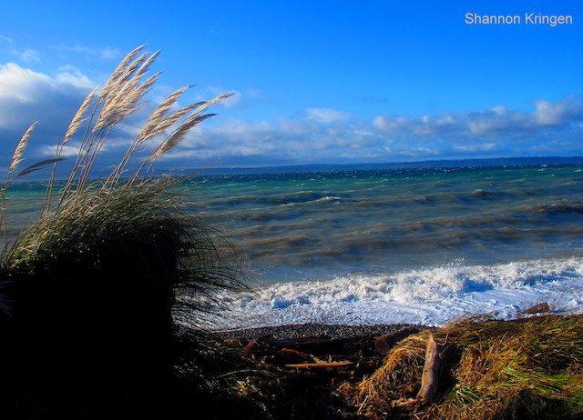 Washington Sea Grant Puget Sound Photo Shannon Kringen.jpg