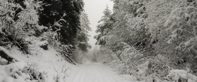 g. Where will the trail lead photo Kristina Wheeler.jpg