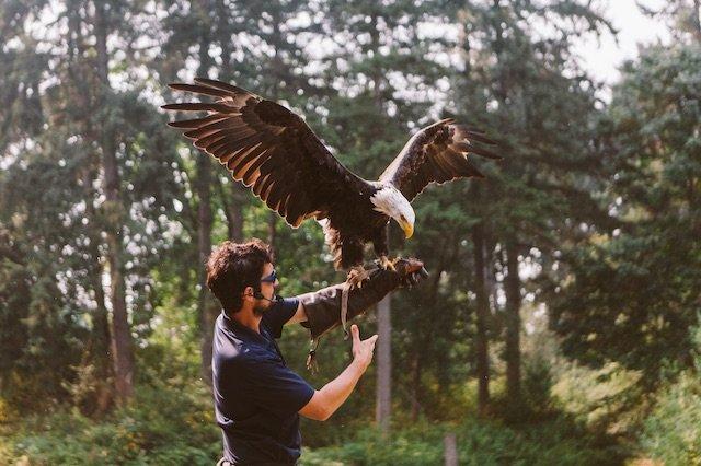 Cowichan Eagle Photo Tourism Vancouver IslandJordan Dyck.jpg