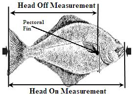 2013 14 halibut limits suncruiser for Michigan fish size limits