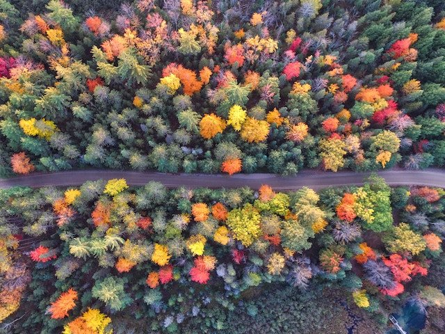 Aerial of Fall Colours