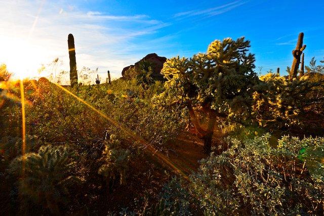 Sun at Desert Botanical Garden.jpg