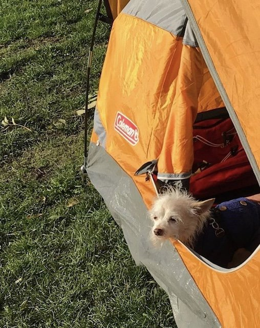 Taking the family camping. Find dog friendly campsites on Campertunity. .jpg