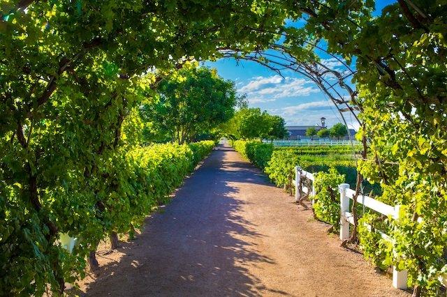 Agritopia Arch Lead Photo Fresh Foodie Story_Mesa.jpg