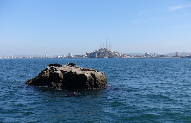 Sea lions snooze with the Mazatlan cell towers in the background.JPG