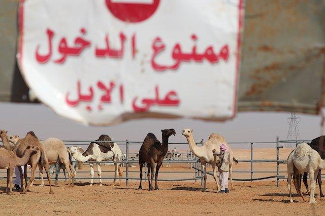 10 Riyadh Photo Perry Mack.JPG