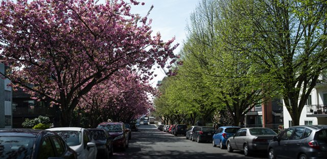 Mount Pleasant streets lined with trees