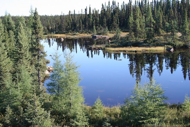 NL quiet pond Labrador JStoness 6590.JPG