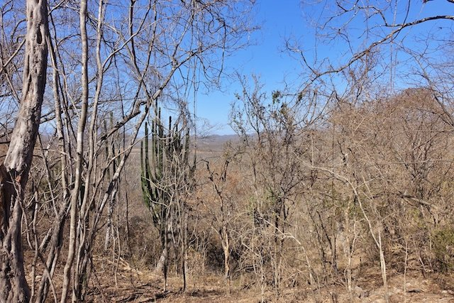 Cacti among a surreal dried forest line this trail 4 photo Perry and Cindy Mack.JPG