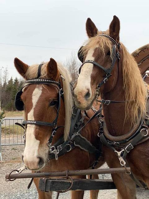 horses_two_rivers.jpg